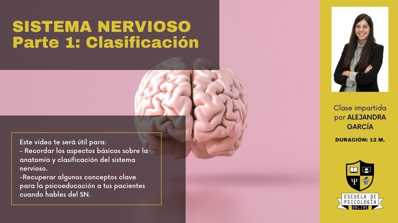 Sistema nervioso – parte 1: clasificación